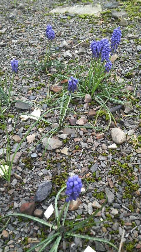 12.4.15庭の花.JPG