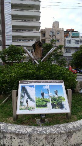 15.12.27沖縄ツアー・沖縄国際大学①.jpg