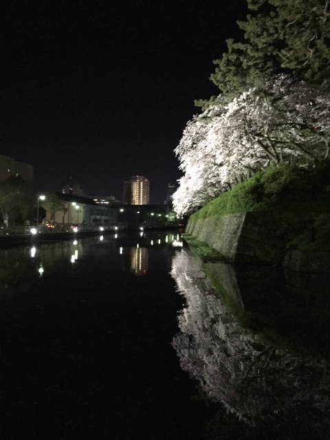 16.4.5駿府城公園の桜①.jpg