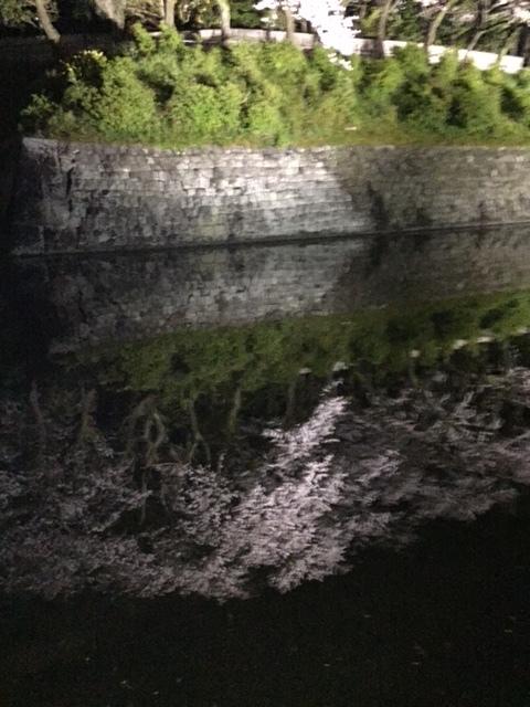 16.4.5駿府城公園の桜②.jpg