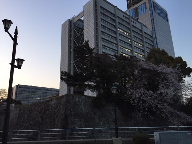 18.3.25日曜日夕方6時の県庁と桜.JPG