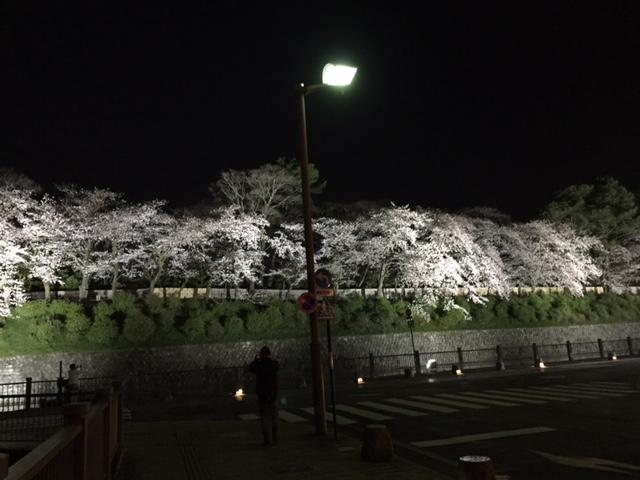 18.3.27駿府城公園・夜桜②.JPG