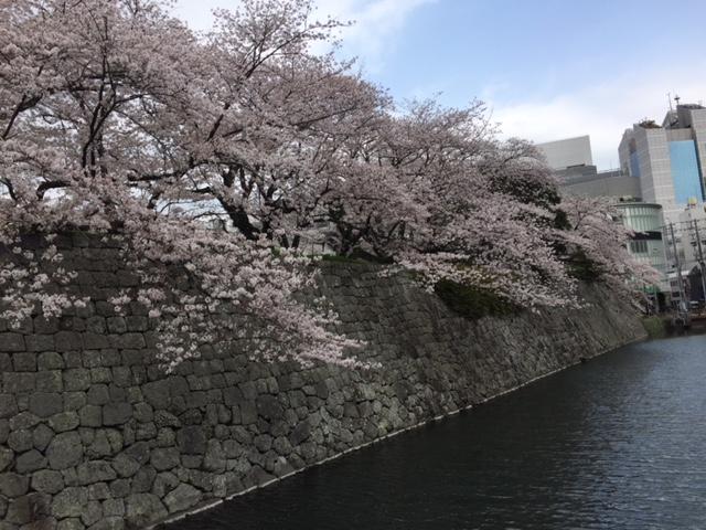18.3.30教育会館前桜と堀①.JPG