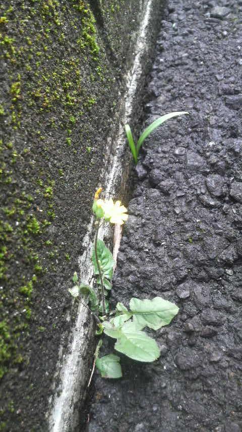 14.6.12市教組会館に咲く花②反対側にも.jpg